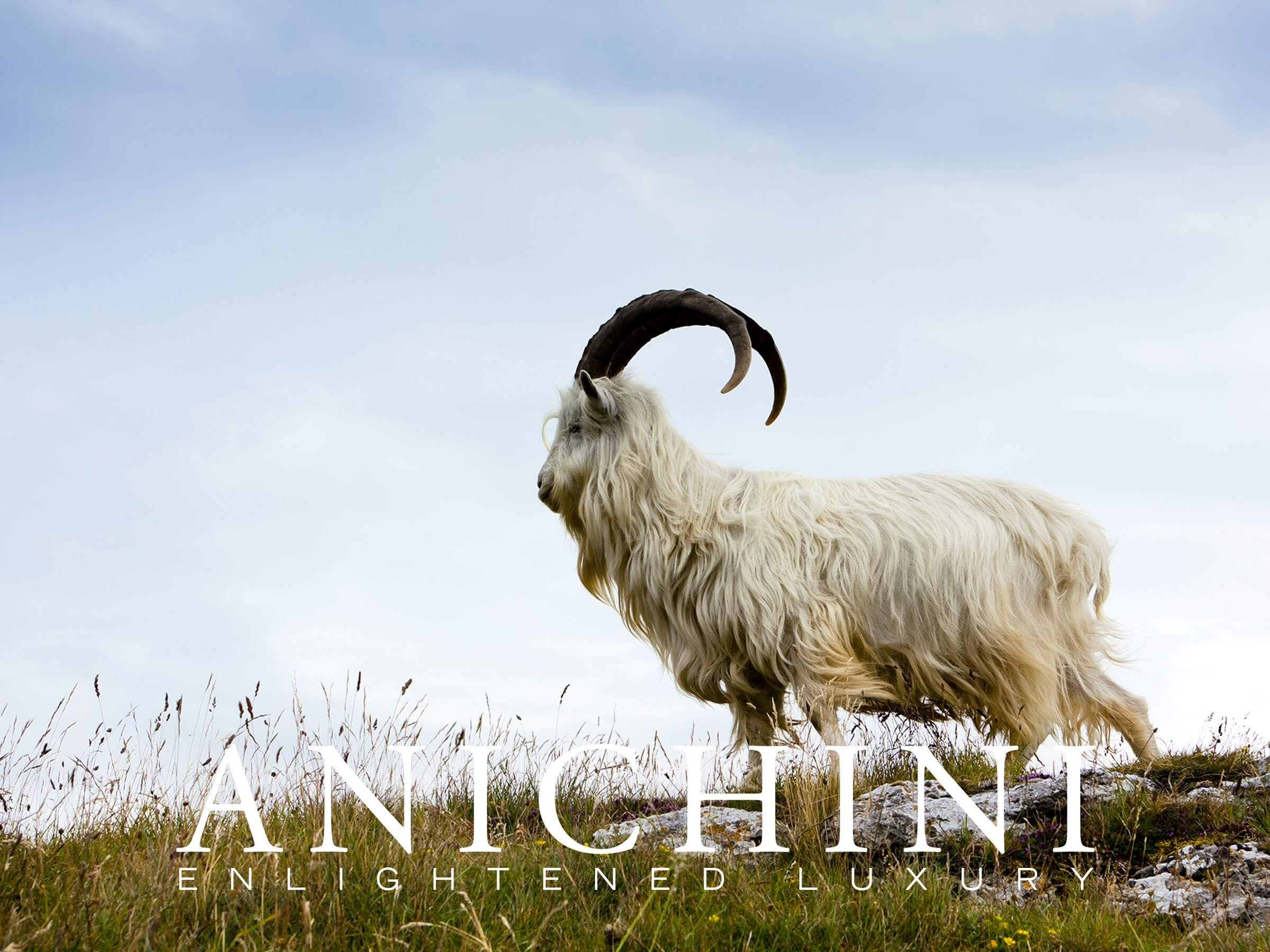 Anichini Cashmere E-Gfit Card
