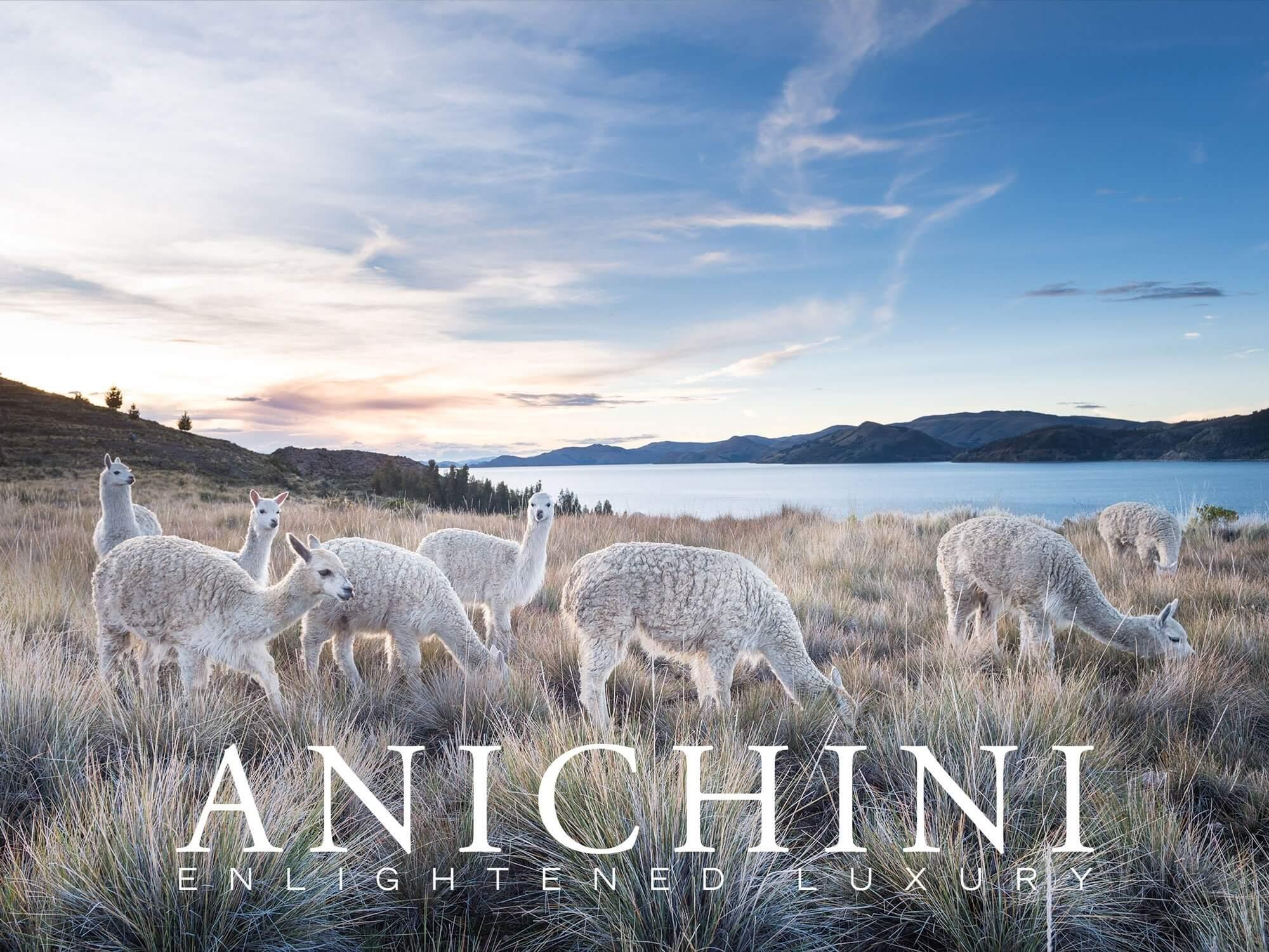 Anichini Llama E-Gfit Card