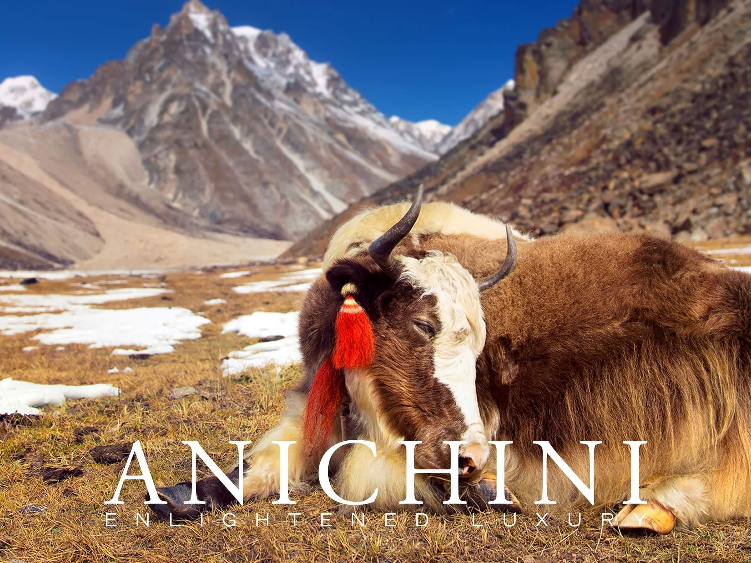 Anichini Yak E-Gfit Card